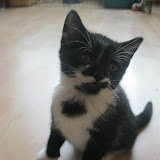 katten - 2011-04-06%2B09-47-27%2B-%2BIMG_0375.JPG