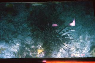 0960Under-Water Sightseeing