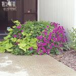 images-Seasonal Color-flowers_5.jpg