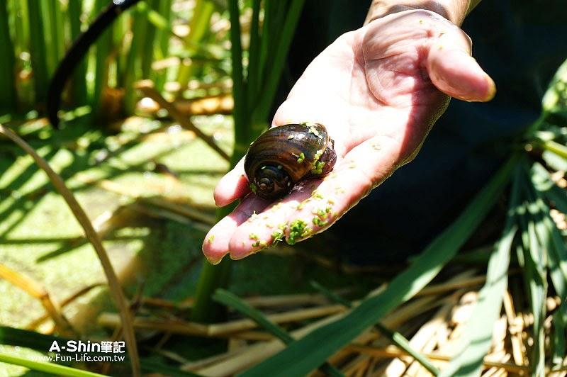 桃米休閒農業區11