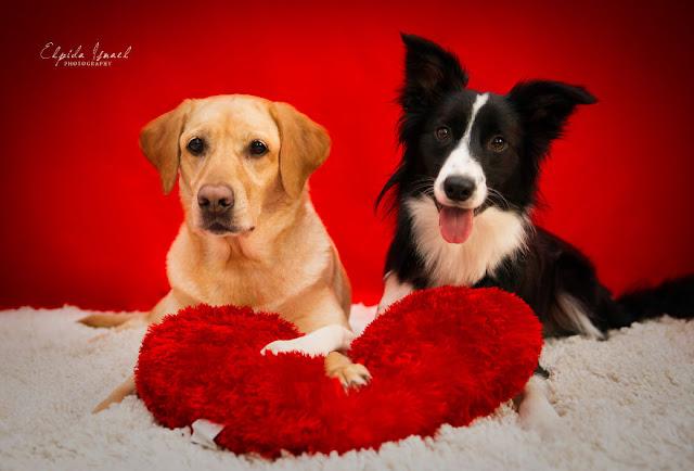 Две собаки в доме