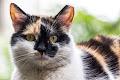 Pisicile din curte-15_web.jpg