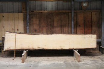 "602  Ambrosia Maple - 1 8/4x 23"" x 18"" Wide x  10'  Long"