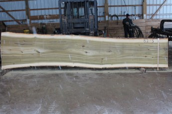"082 - 5 Poplar 2 1/2"" x 42 - 30"" Wide x 16' Long  Kiln dried"