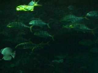 1140Aquarium Fish Schooling