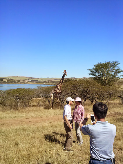 giraffe and clients posing together for pictures