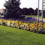 images-Seasonal Color-flowers_9.jpg