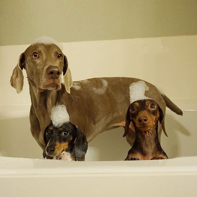 сколько лет живут собаки