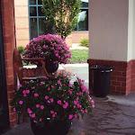 images-Seasonal Color-flowers_12.jpg