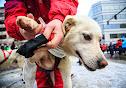 Iditarod2015_0120.JPG