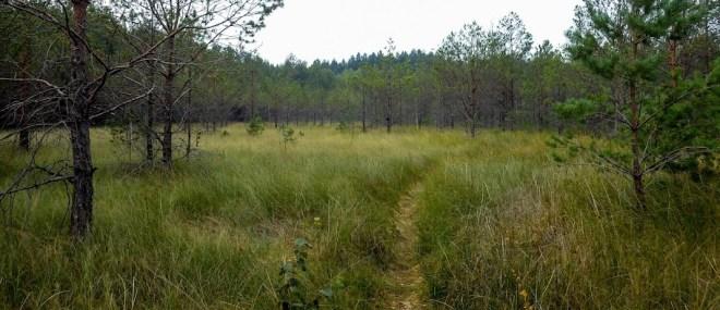 ліс біля с.Воронки