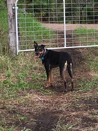 dog-smiling-gate-2017-03-27-11-46.jpg