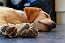 Потовыделение у собак