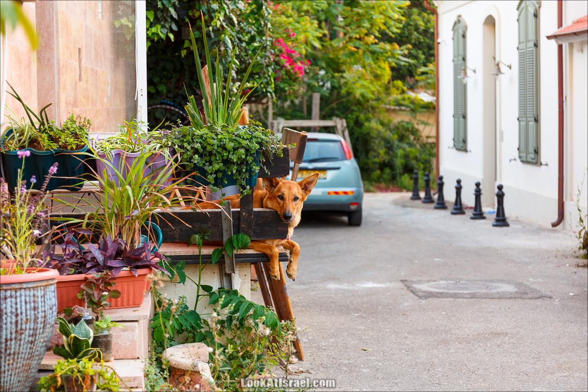Скучающие пёс в Неве Цедек, Тель-Авив | LookAtIsrael.com - Фото путешествия по Израилю и не только...
