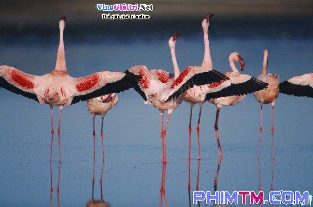 Xem Phim Bí Mật Của Chim Hồng Hạc - The Crimson Wing: Mystery Of The Flamingos - phimtm.com - Ảnh 2