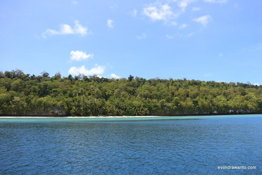 Perairan Pulau Maratua rumbah bagi lumba-lumba Derawan