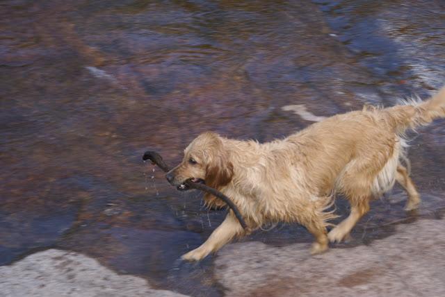 River in La Cumbrecita and funny dog