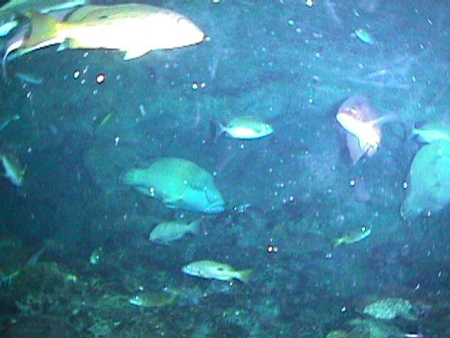 1120Aquarium Fish Schooling