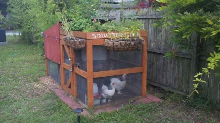One solution, though not everyone can raise their own chickens.