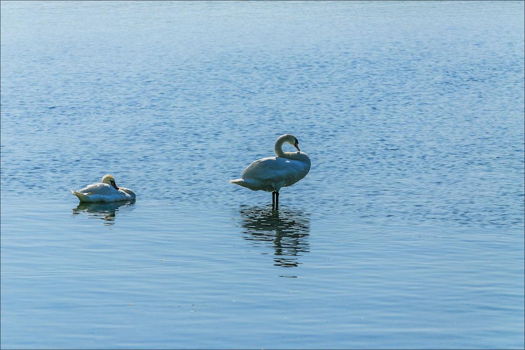 LookAtCanada.com / Вдоль по Lake shore Торонто | LookAtIsrael.com - Фотографии Израиля и не только...