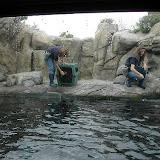 Montery Bay Aquarium, USA - 207779469_9c4c440011.jpg