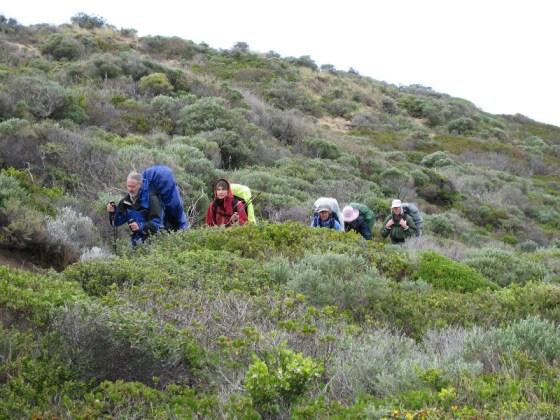 Whaleback, Cape to Cape Track