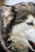 Iditarod2015_0132.JPG