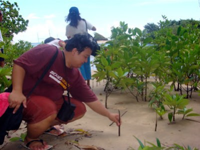 Day 2 - Sir Ervin plants his remembrance Mangrove shoot.