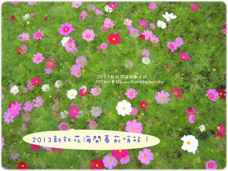 2013新社花海 探勘之旅