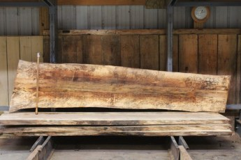 """612 Maple Spalted - 3 10/4x 26"""" x 21"""" Wide x  10'  Long"""