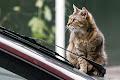 Pisicile din curte-5_web.jpg