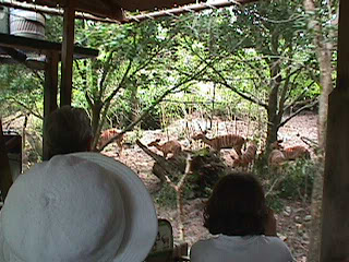 0230African Safari