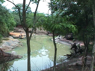 0210African Safari
