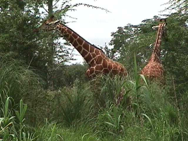 0400African Safari