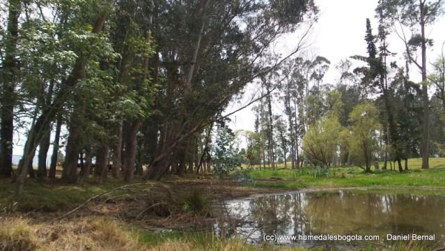 Bosque de las Lechuzas