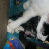 katten - 2011-02-24%2B20-29-42%2B-%2BIMG_0234.JPG