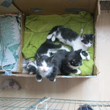 katten - 2011-04-03%2B10-29-35%2B-%2BIMG_0347.JPG