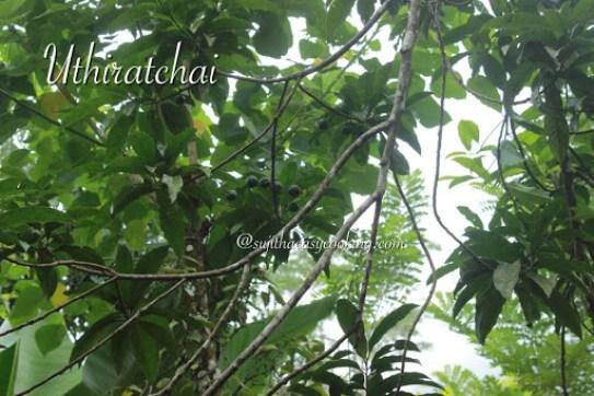 Uthiratchai