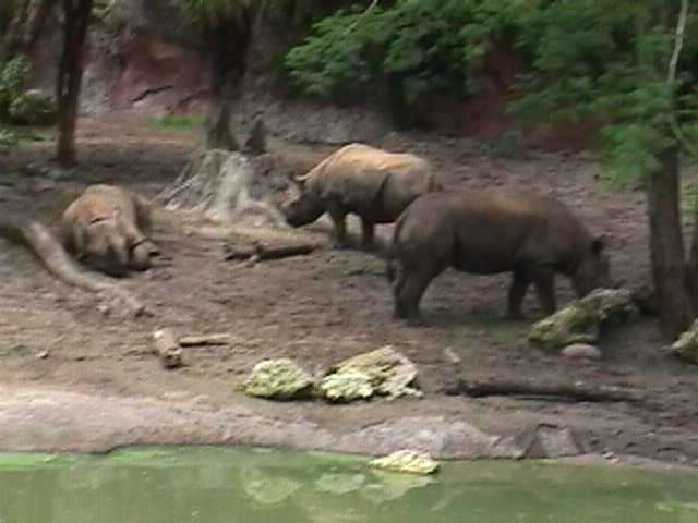 0220African Safari