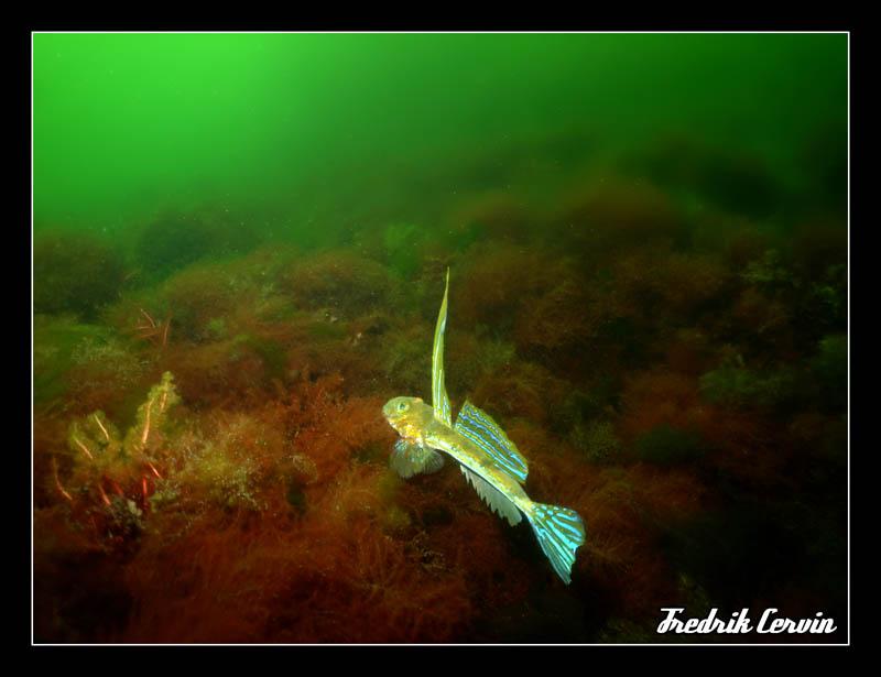 Blandat från Kullaberg - DSC05948.jpg