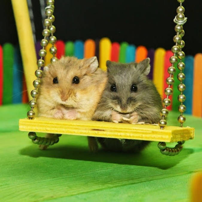 Hamstersonswing1_opt