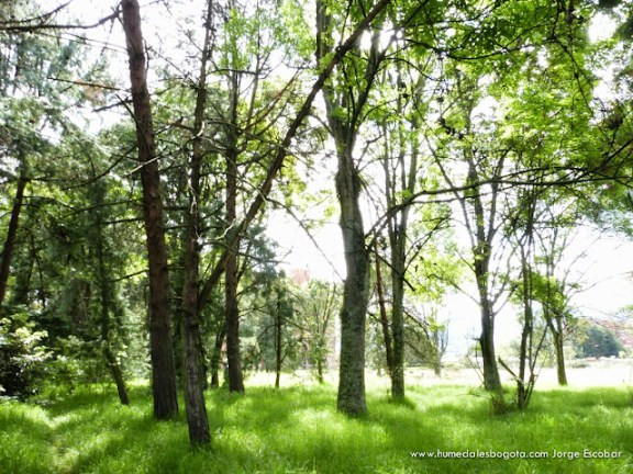 Bosque de Urapanes