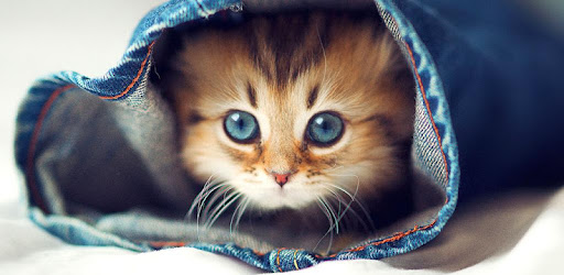 Cute Cats Live Wallpaper - Apps on Google Play