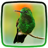 Cat and Hummingbirds Wallpaper Android Apps on Google Play