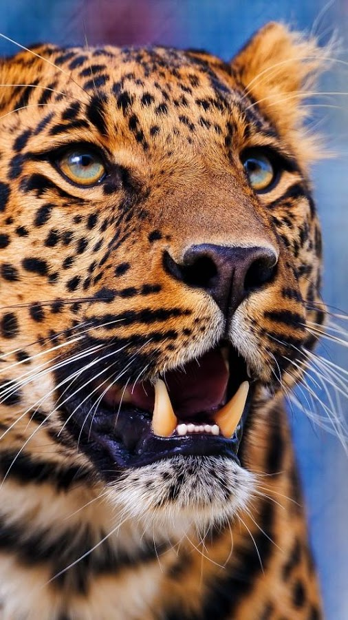 Animal Wallpapers HD - Android Apps on Google Play