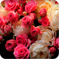 valentine roses wallpaper