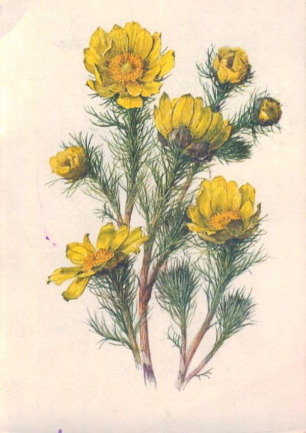 красивое правило: названия растений из красной книги фото