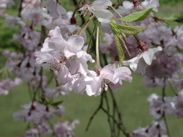 dekabristich: наблюдения в природе весной