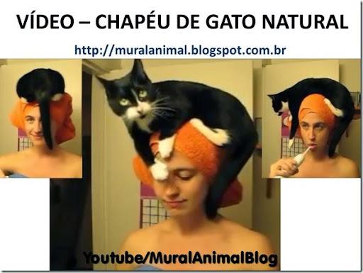VÍDEO – CHAPÉU DE GATO NATURAL