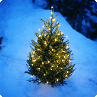 christmas-tree-in-snow